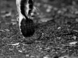 Half Marathon GMUWFundraiser